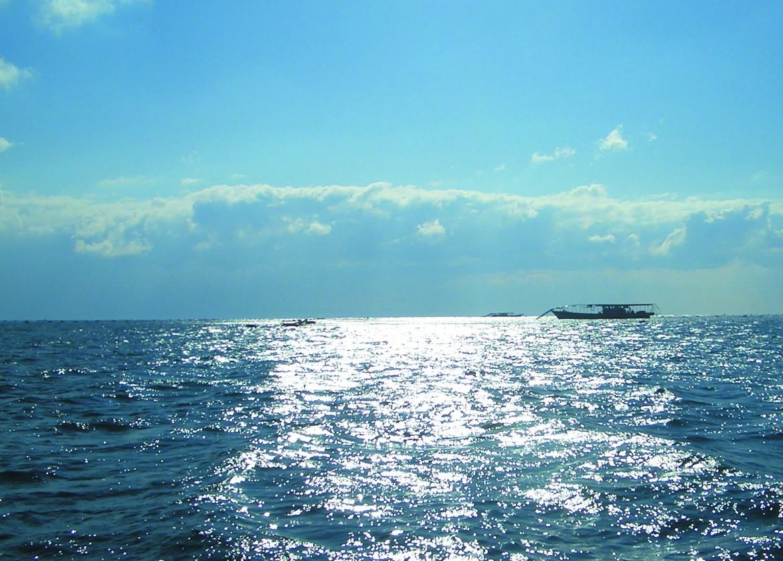 海の幸 イカナゴ&須磨海苔-3