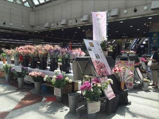 新生活にメイドイン神戸の花を-こうべ花マルシェを開催します!