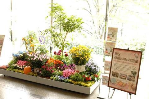 神戸の花で神戸の街を飾る「街の彩ガーデン」-Autumn Version-登場!!