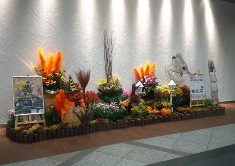 神戸の花で神戸の街を飾る「街の彩ガーデン」-神戸花物語2017秋Halloween Version-登場!!
