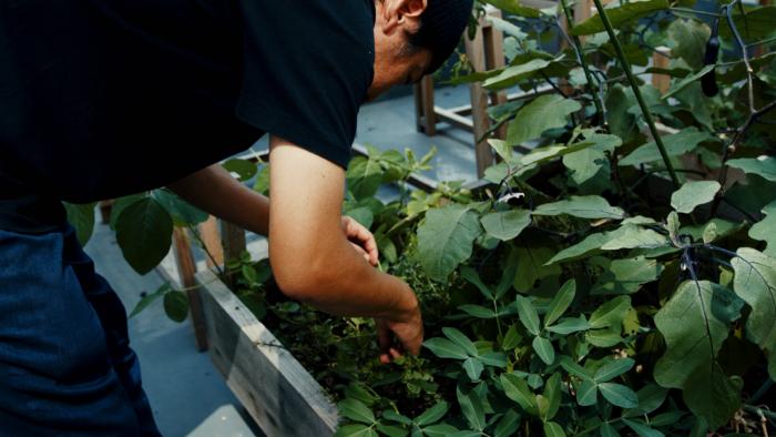 【募集終了】まちの中で野菜を育てる。神戸のアーバンファーム ツアーを開催します。-1