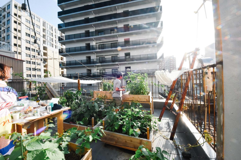 【募集終了】まちの中で野菜を育てる。神戸のアーバンファーム ツアーを開催します。-3