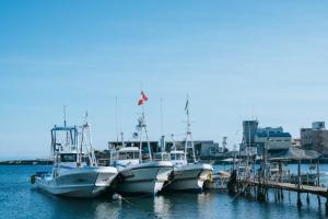 駒ヶ林の海と、魚と、〇〇を楽しむマーケット「海と、魚と、」を開催!-1