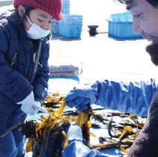 『第9回須磨浦早採りワカメ株付け体験オーナー』を募集します!~早採りワカメの 株付け・収穫も体験できます~-2