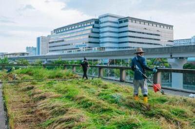六甲アイランドに都市農園「シェラトンファーム」がオープンします!-1