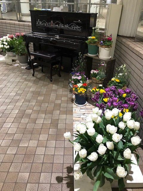 ストリートピアノと奏でる神戸花物語2021春 Flower & Music-2
